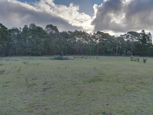 Forest-HDR-5-0-orig.jpeg