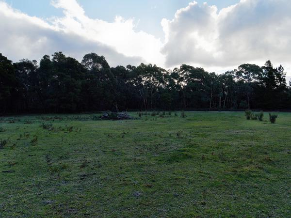Forest-HDR1-JPEG.jpeg