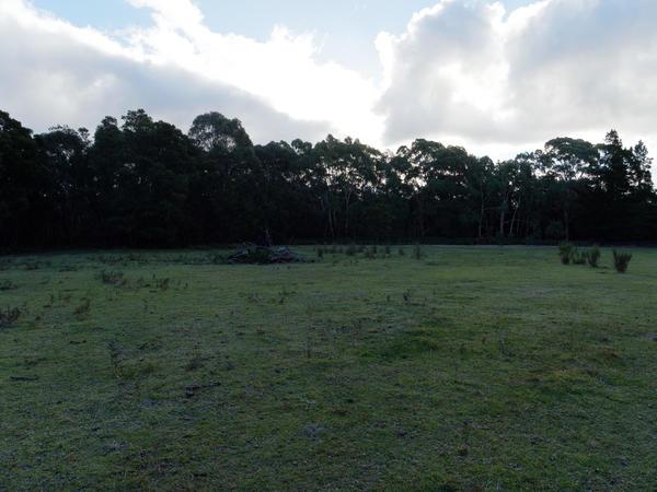 Forest-HDR2-JPEG-orig.jpeg