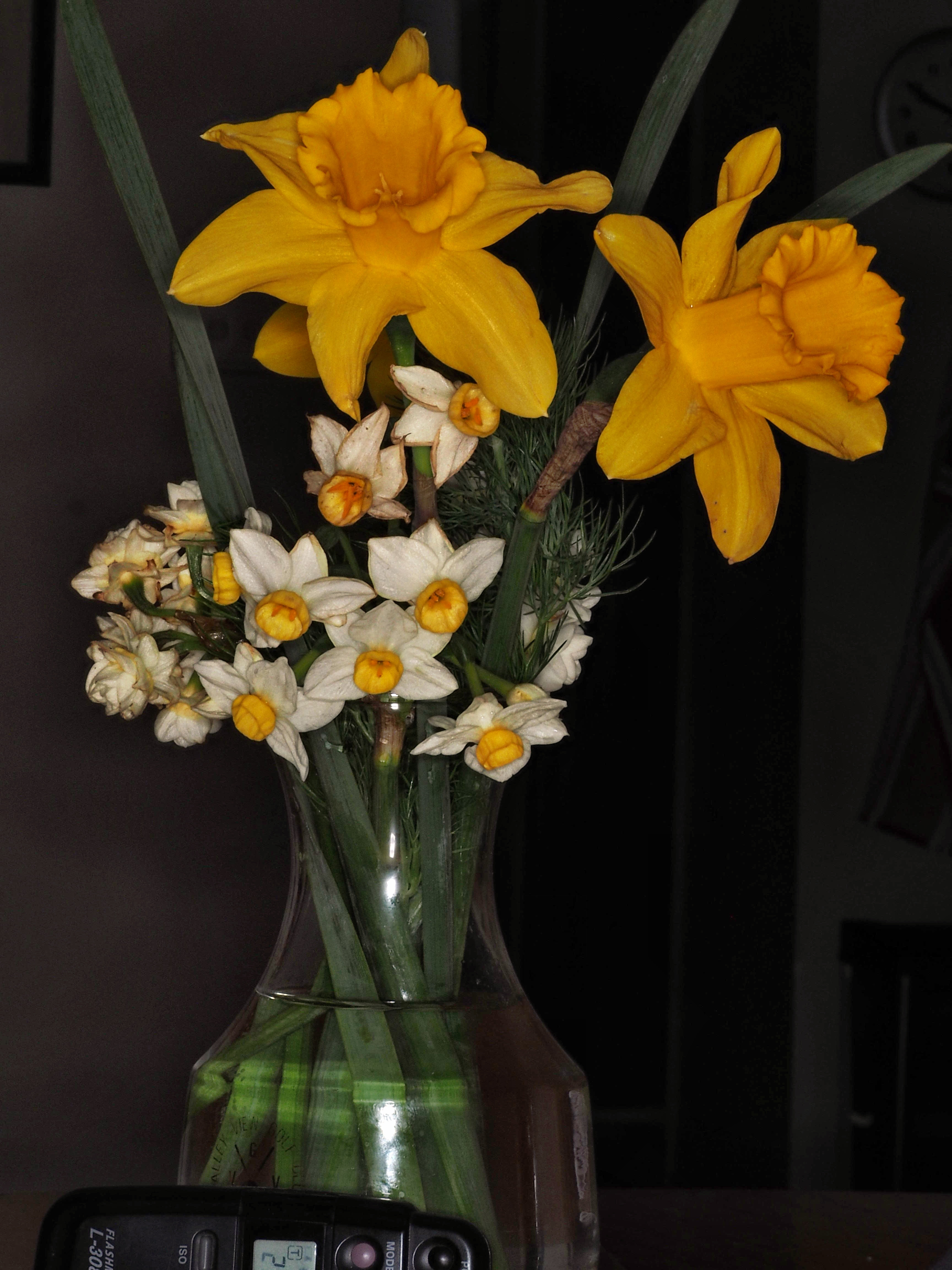 Narcissus-JPEG-2.jpeg