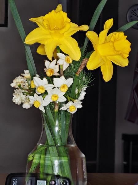 Narcissus-JPEG-3.jpeg