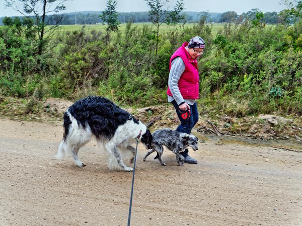 Walking-dogs-3.jpeg
