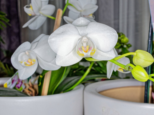 Orchid-1.jpeg