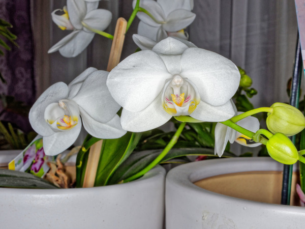 Orchid-2.jpeg