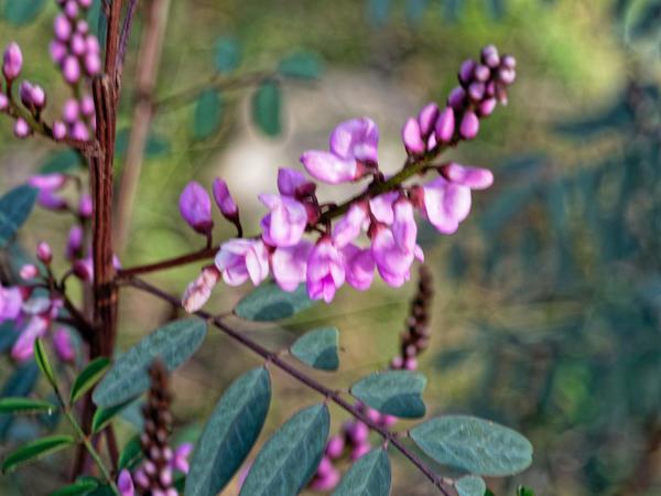 Mystery-plant-14.jpeg