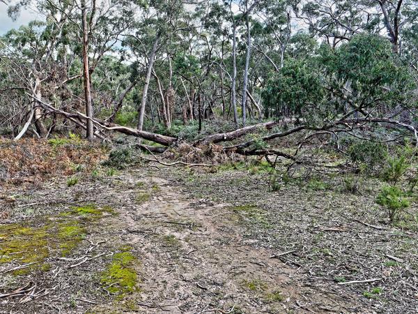 Fallen-tree.jpeg