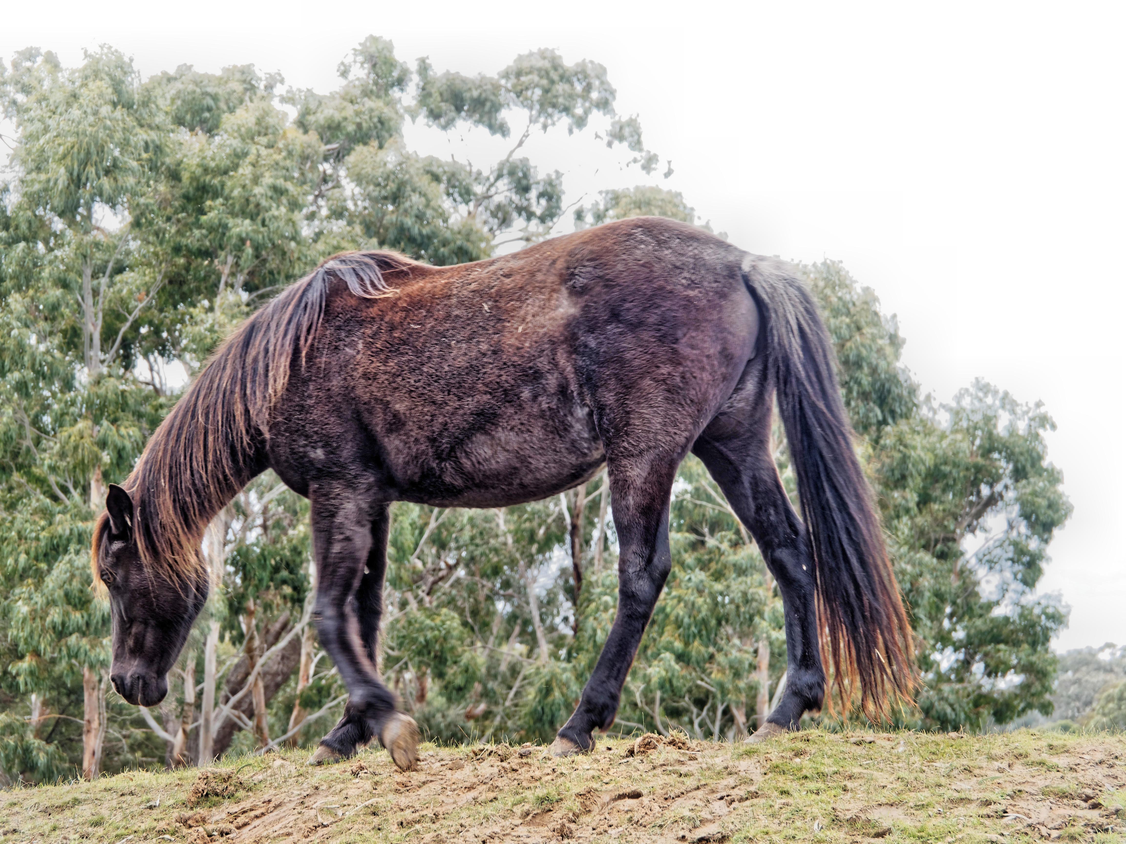Horses-8.jpeg