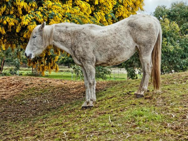 Horses-10.jpeg