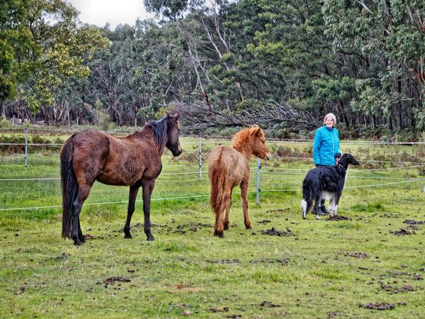 Yvonne-Leonid-horses.jpeg