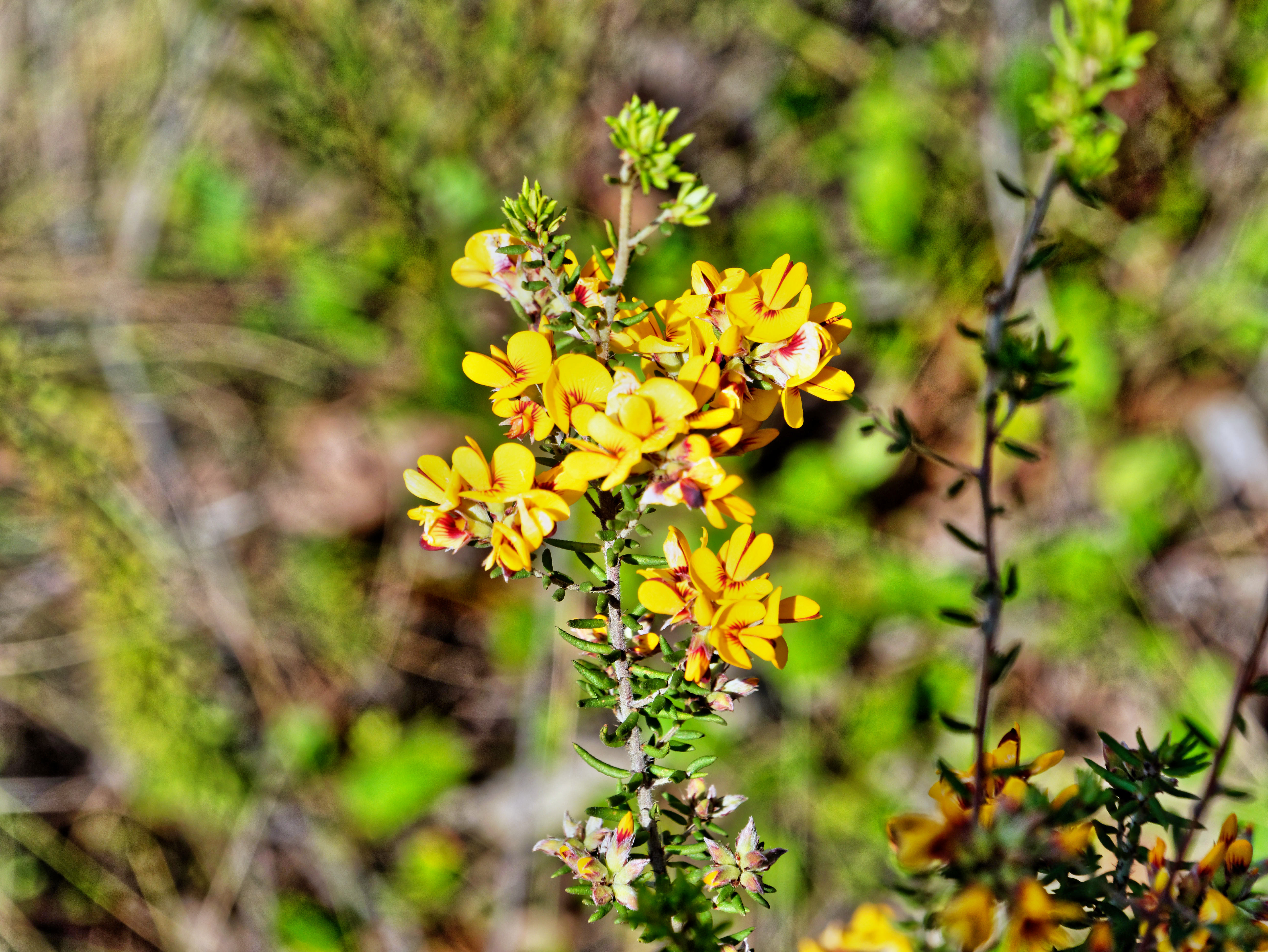 Mystery-flower-17.jpeg
