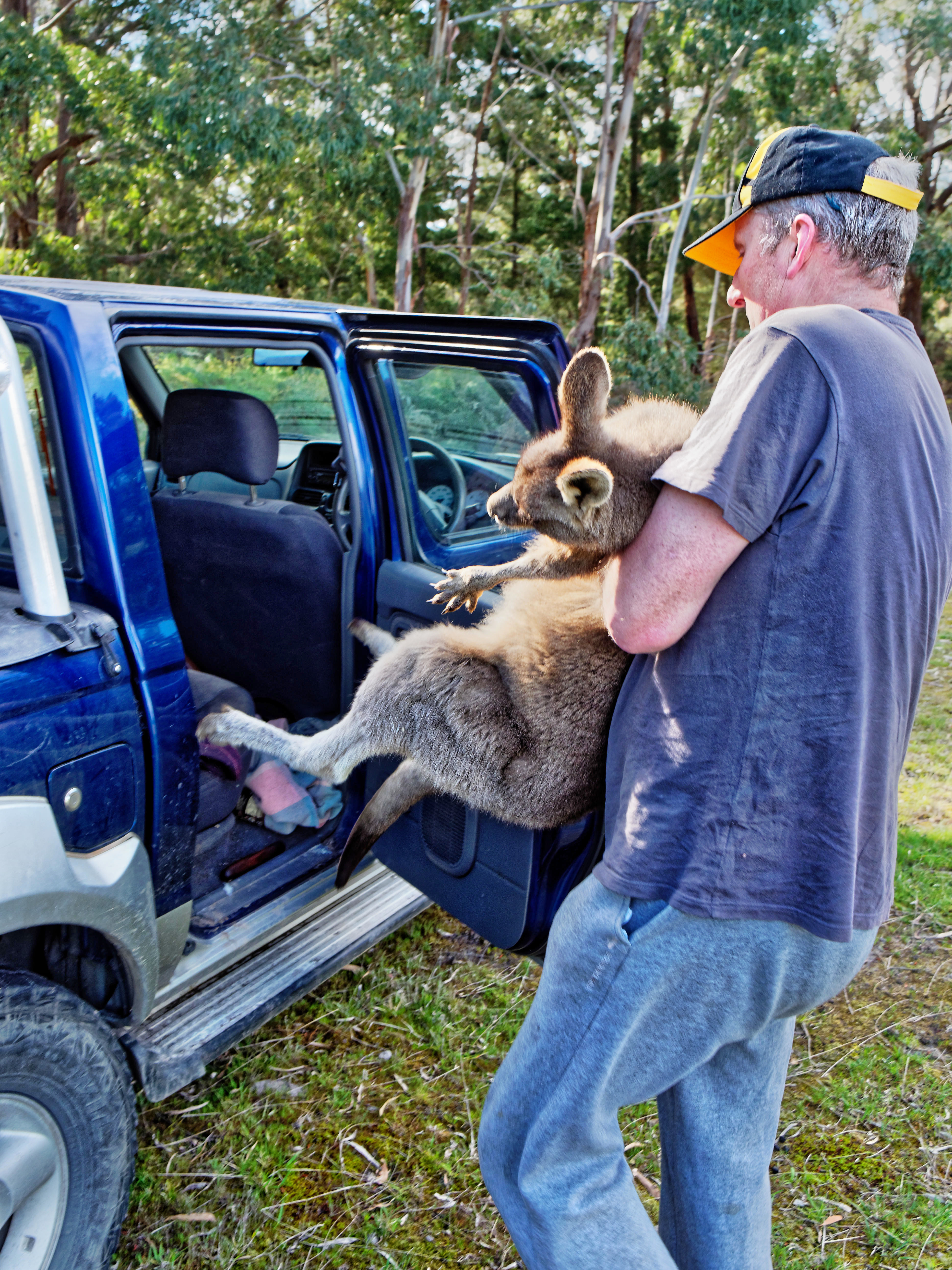 Kangaroo-rescue-37.jpeg
