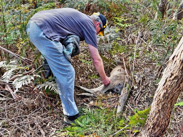 Kangaroo-rescue-10.jpeg