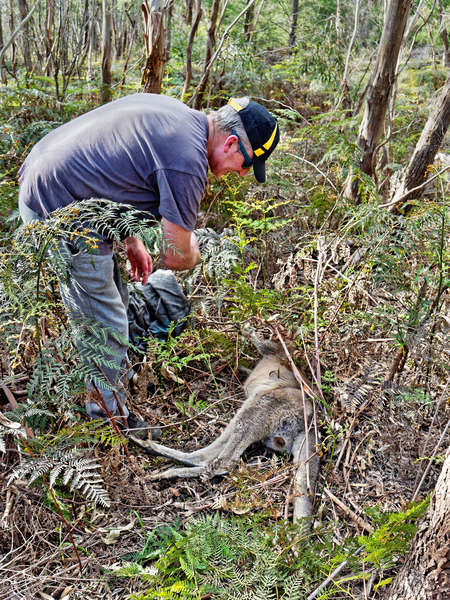 Kangaroo-rescue-13.jpeg