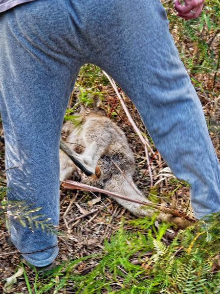 Kangaroo-rescue-22.jpeg