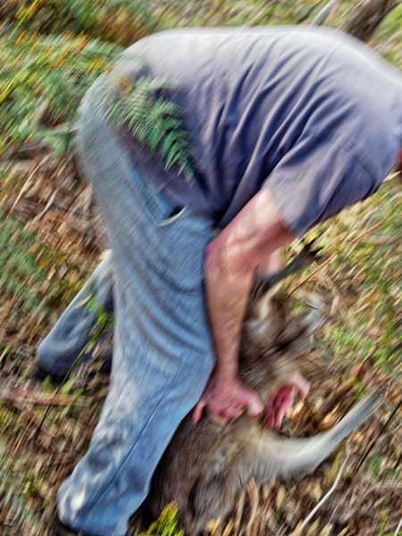 Kangaroo-rescue-26.jpeg