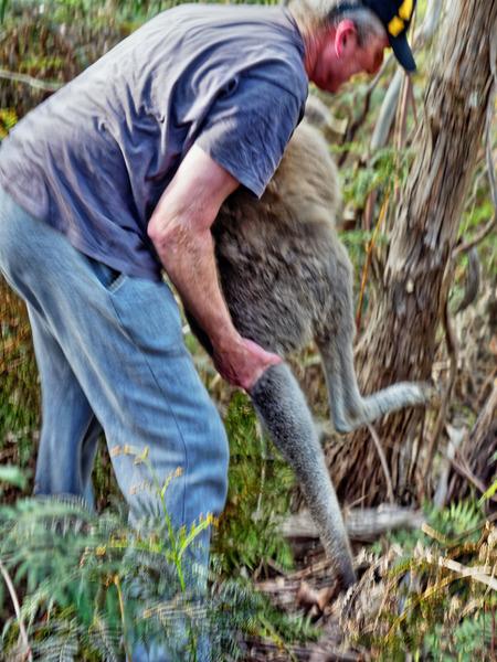 Kangaroo-rescue-32.jpeg