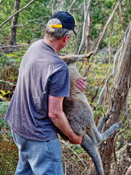 Kangaroo-rescue-34.jpeg