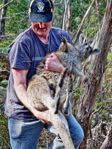 Kangaroo-rescue-35.jpeg