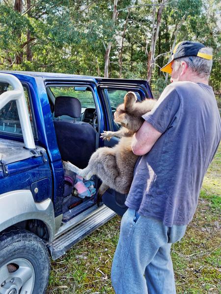 Kangaroo-rescue-38.jpeg
