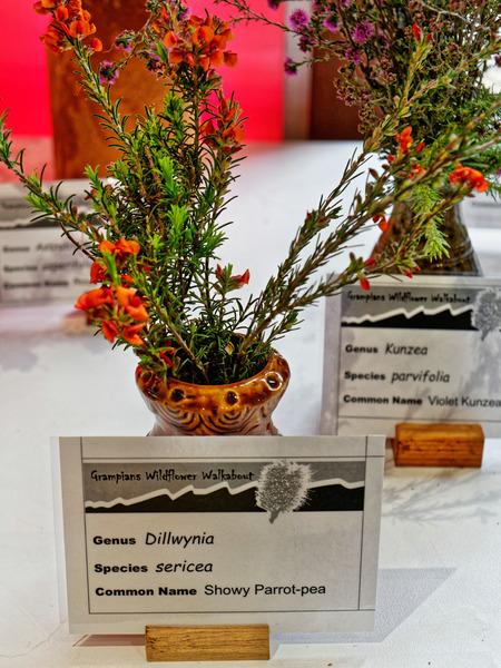 Dillwynia-sericea.jpeg