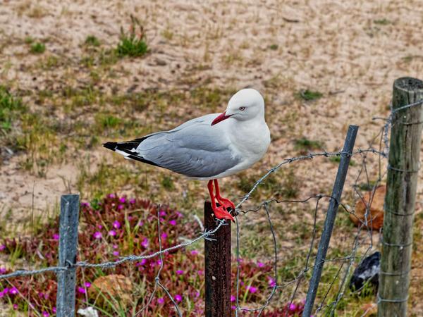 Seagull-2.jpeg