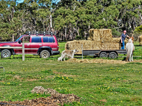 Feeding-horses-2.jpeg