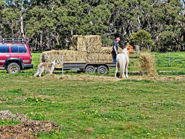 Feeding-horses-3.jpeg