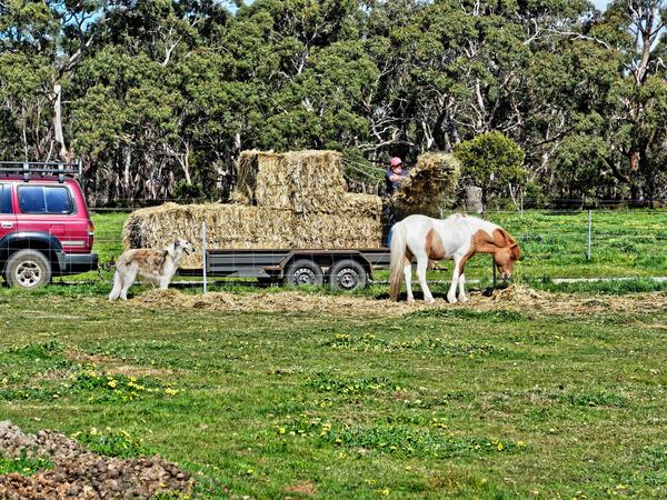 Feeding-horses-5.jpeg