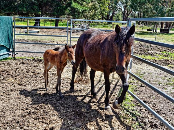 Sidi-with-foal-1.jpeg