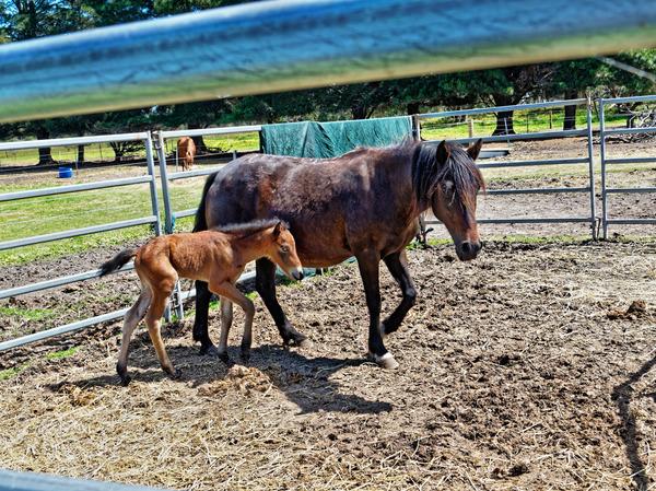Sidi-with-foal-2.jpeg