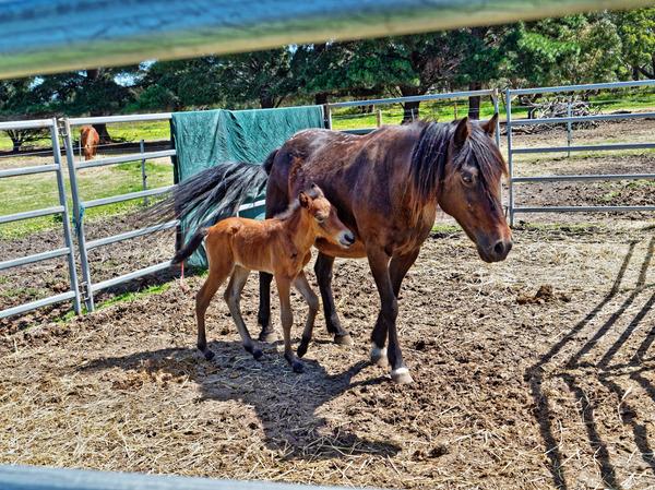 Sidi-with-foal-3.jpeg