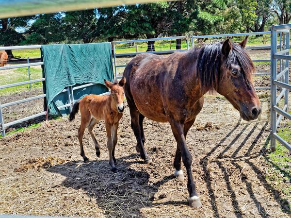 Sidi-with-foal-4.jpeg