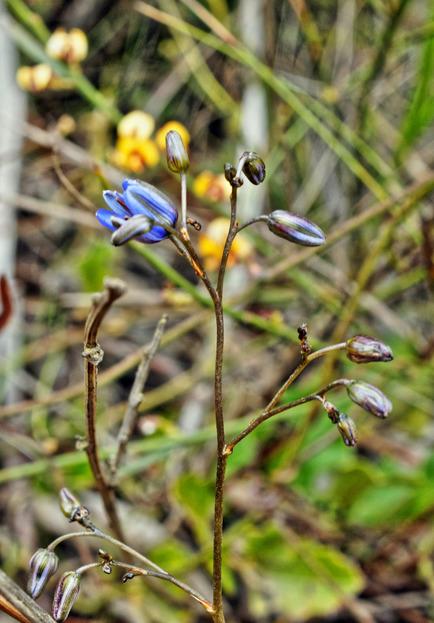 Mystery-plant-13.jpeg