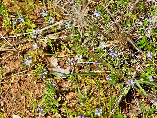 Wildflowers.jpeg