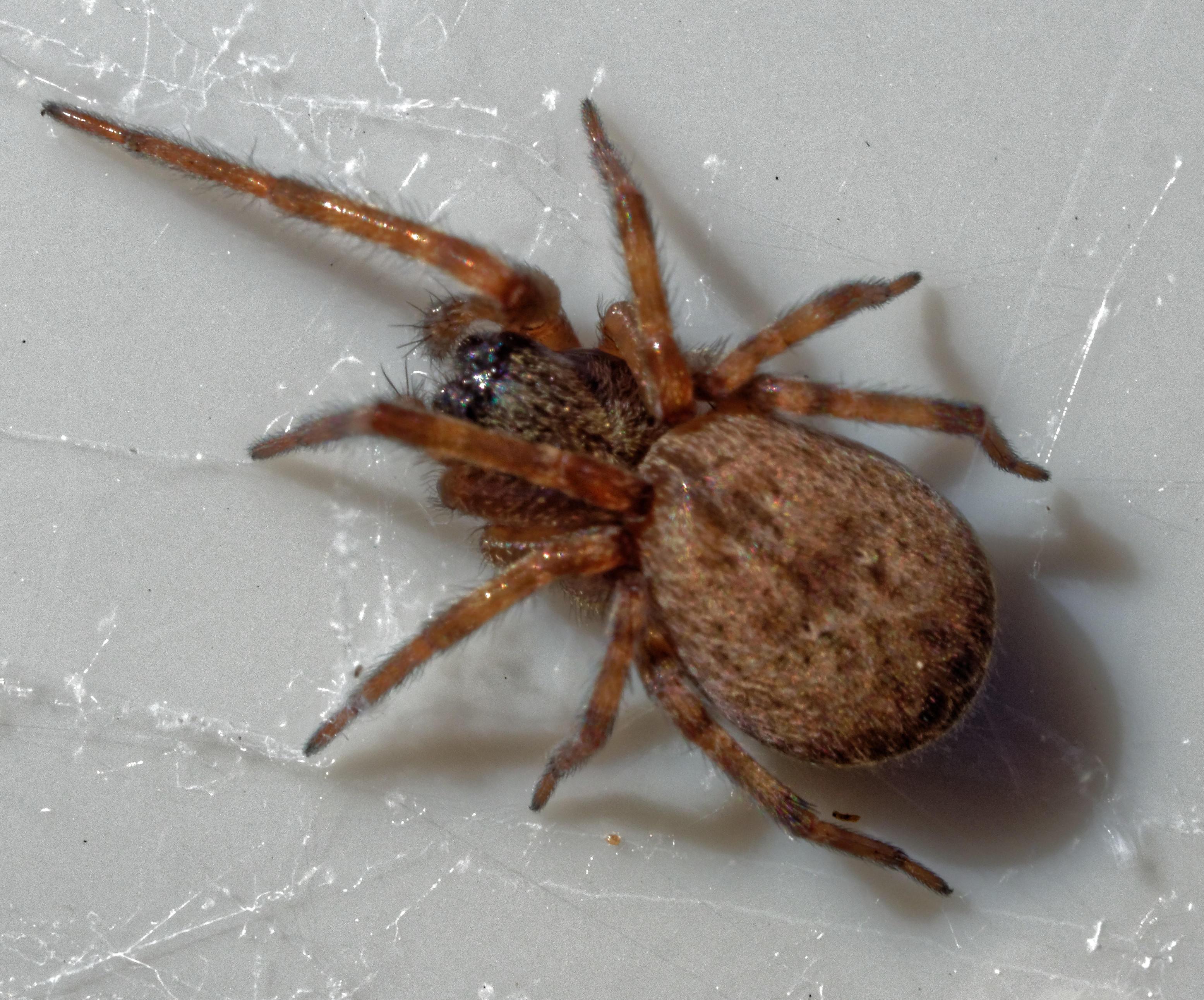 Spider-5.jpeg
