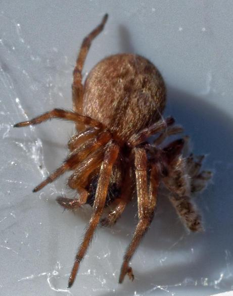 Spider-9.jpeg