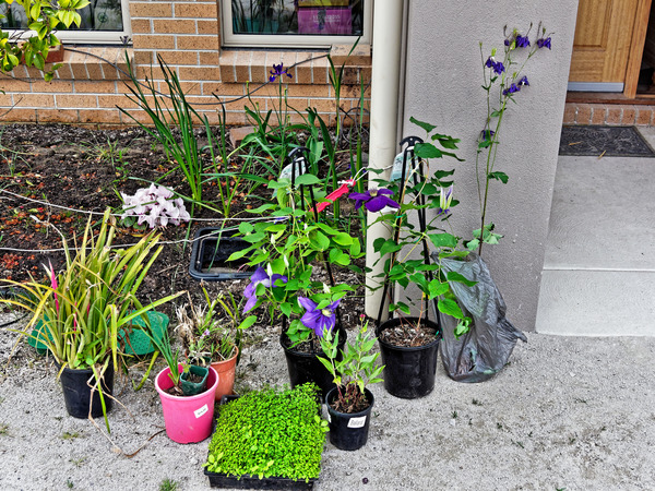New-plants-1.jpeg