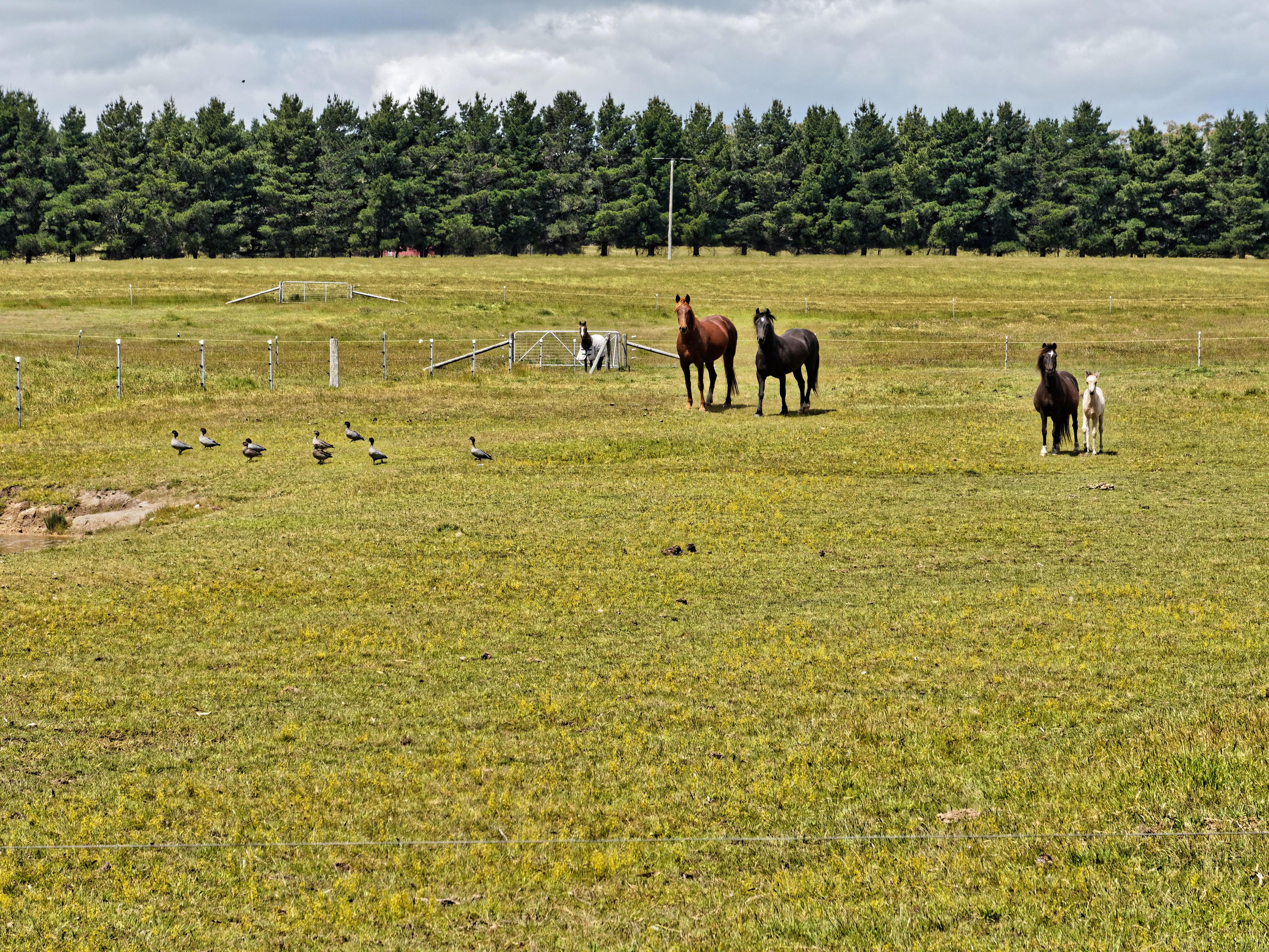 Horses-1.jpeg