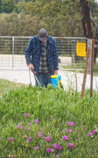 Spraying-weeds-2.jpeg