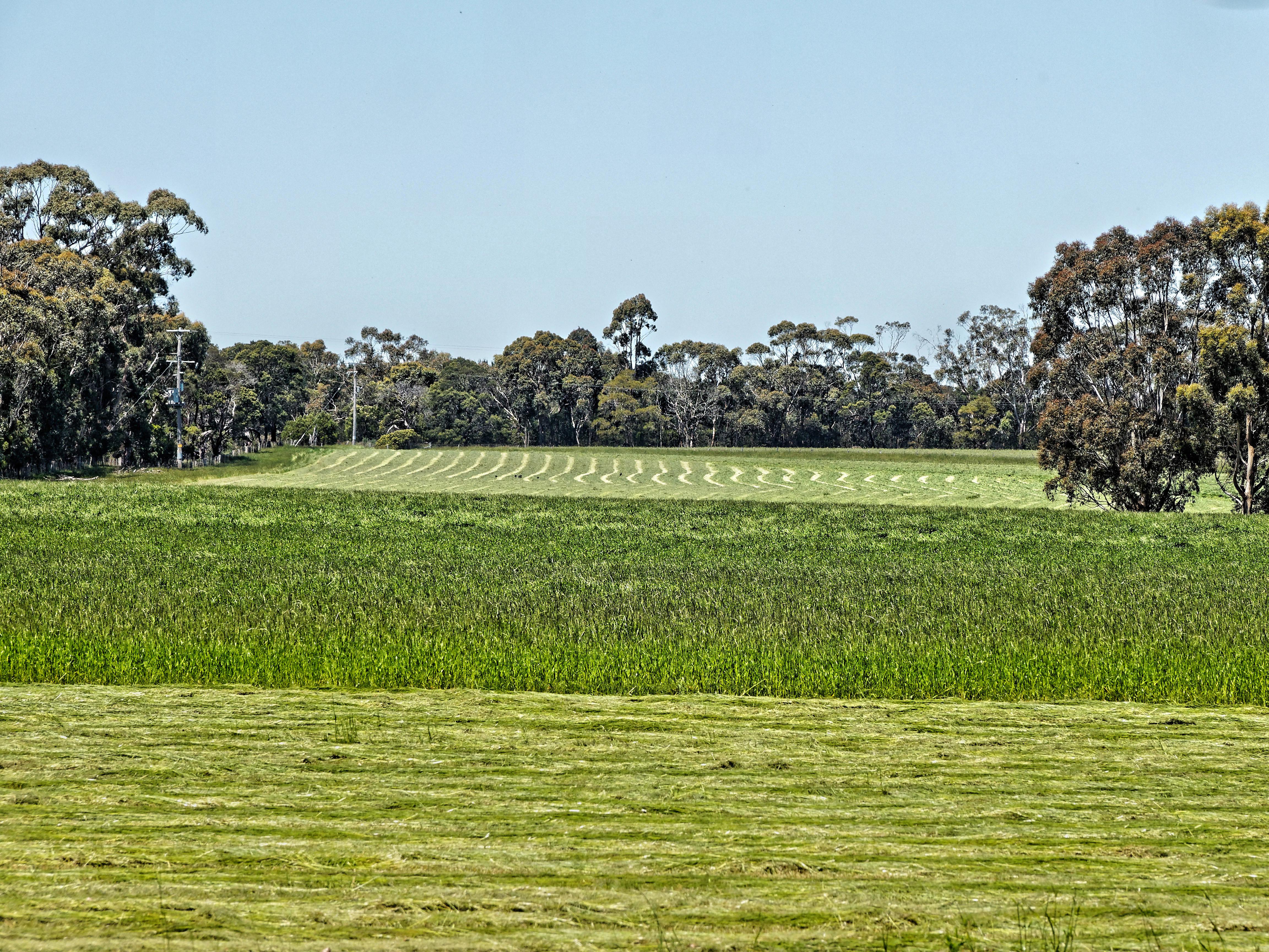 Mowing-hay.jpeg