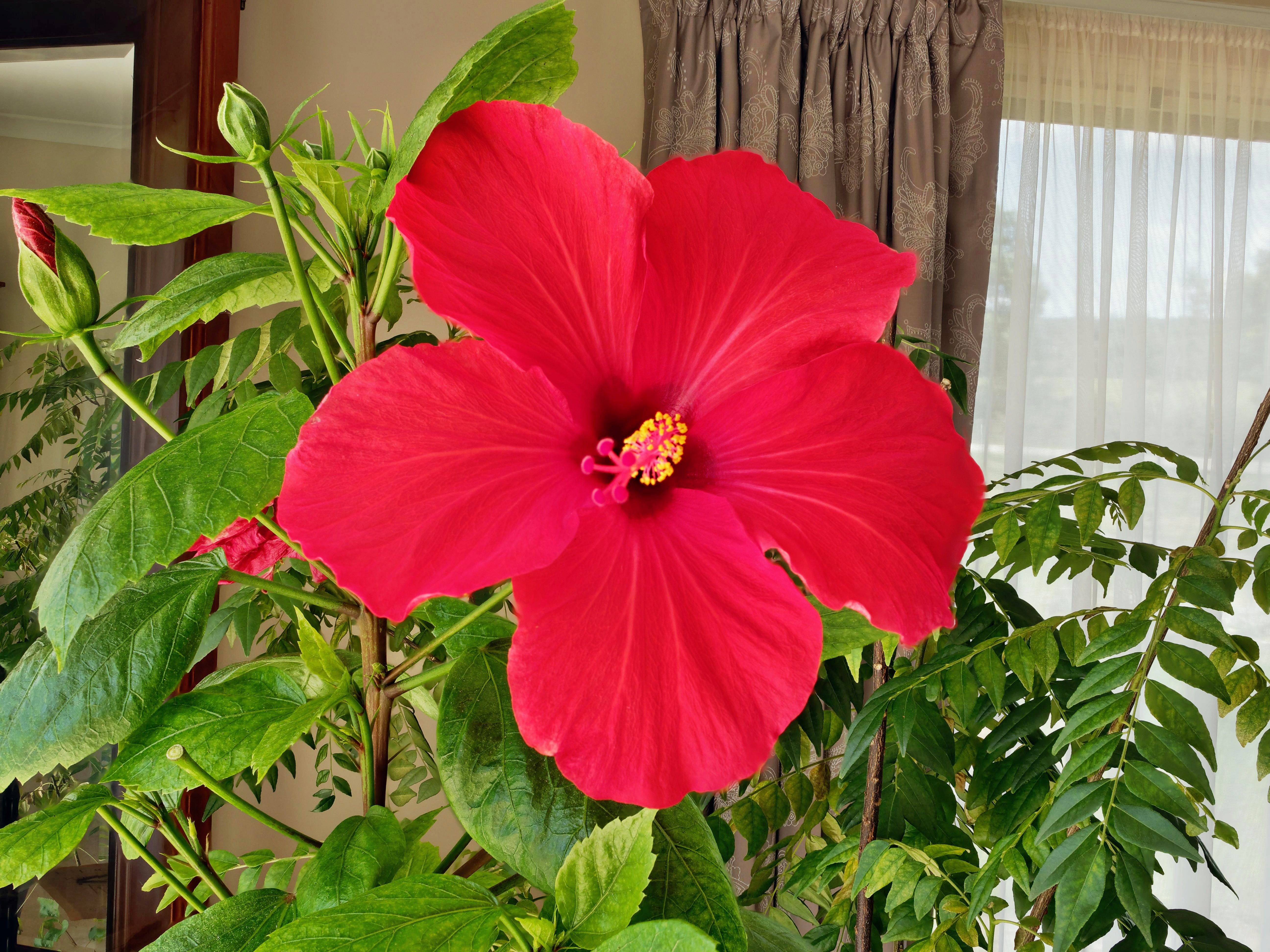 This should be Hibiscus-1.jpeg.  Is it missing?