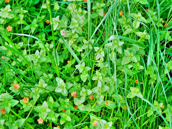 Wildflower.jpeg