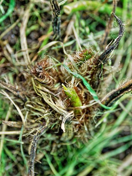 Tree-fern-4.jpeg