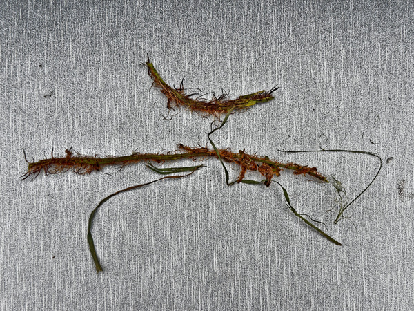 Tree-fern-remains.jpeg
