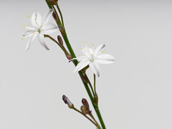 Wildflower-1-PMax.jpeg