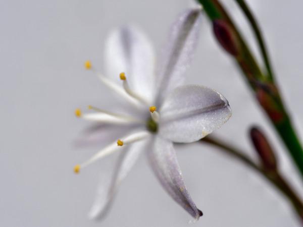 Wildflower-5.jpeg