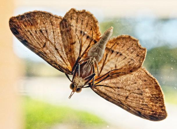 Moth-3.jpeg