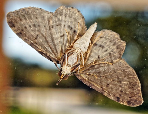 Moth-4.jpeg