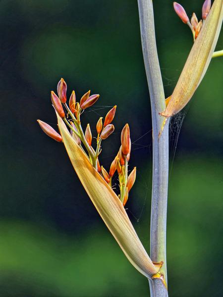 Grass-flower-3.jpeg
