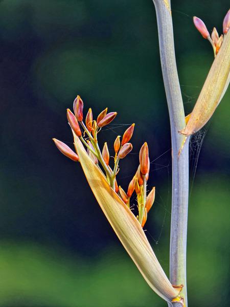 Grass-flower-4.jpeg